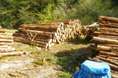 建築・土木・林業