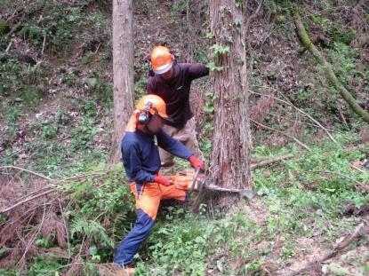伐採現場職員